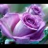 3002_1536071104_avatar