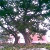 3002_1534526594_avatar