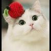 3002_1102438452_avatar