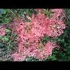 3002_1511061599_avatar