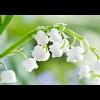 3002_1524621756_avatar