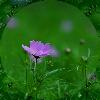 3002_1512699493_avatar