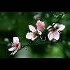 3002_1406144473_avatar