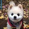 3002_1527433116_avatar