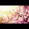 3002_1530709853_avatar