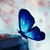 3002_1106440411_avatar