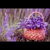 3002_1528641746_avatar