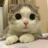 3002_1402535402_avatar