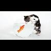 3002_1529719581_avatar