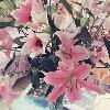 3002_1523310160_avatar