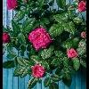 3002_1520899557_avatar
