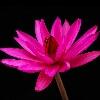 3002_1529284292_avatar