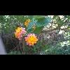 3002_1533129773_avatar