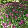 3002_1516191293_avatar