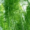 3002_1511592191_avatar