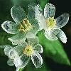 3002_1524529805_avatar