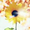 3002_1520451302_avatar