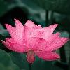 3002_1525726940_avatar