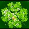 3002_1526309965_avatar