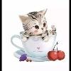 3002_1402476382_avatar