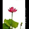 3002_1528764465_avatar