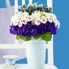 3002_1529884971_avatar