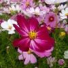 3002_1521344247_avatar