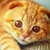 3002_1521009948_avatar