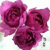 3002_1002921182_avatar