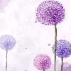 3002_1529728966_avatar