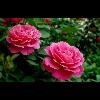 3002_1301436067_avatar
