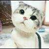 3002_1002992582_avatar