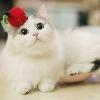 3002_1533770655_avatar
