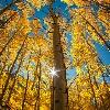 3002_1529615344_avatar