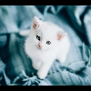 3002_1002381663_avatar