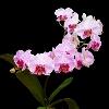 3002_1513865976_avatar