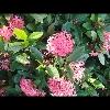 3002_1407023384_avatar