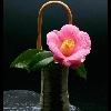 3002_1529052602_avatar