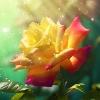 3002_1517502744_avatar