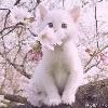 3002_1100540144_avatar