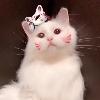 3002_1519134226_avatar