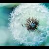 3002_1530959765_avatar