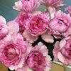 3002_1003053194_avatar