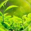 3002_1105524633_avatar