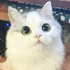 3002_1405761115_avatar