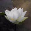 3002_1502321561_avatar