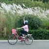 3002_1530744970_avatar