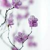 3002_1401748970_avatar