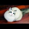 3002_1527049008_avatar