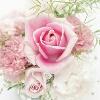 3002_1502735438_avatar